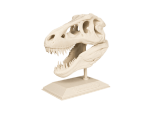 3D yazıcı kullanılarak 3d baskısı alınmış t-rex kafatası