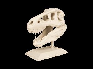 3D yazıcı kullanılarak 3d baskısı alınmış t-rex kafatası 1